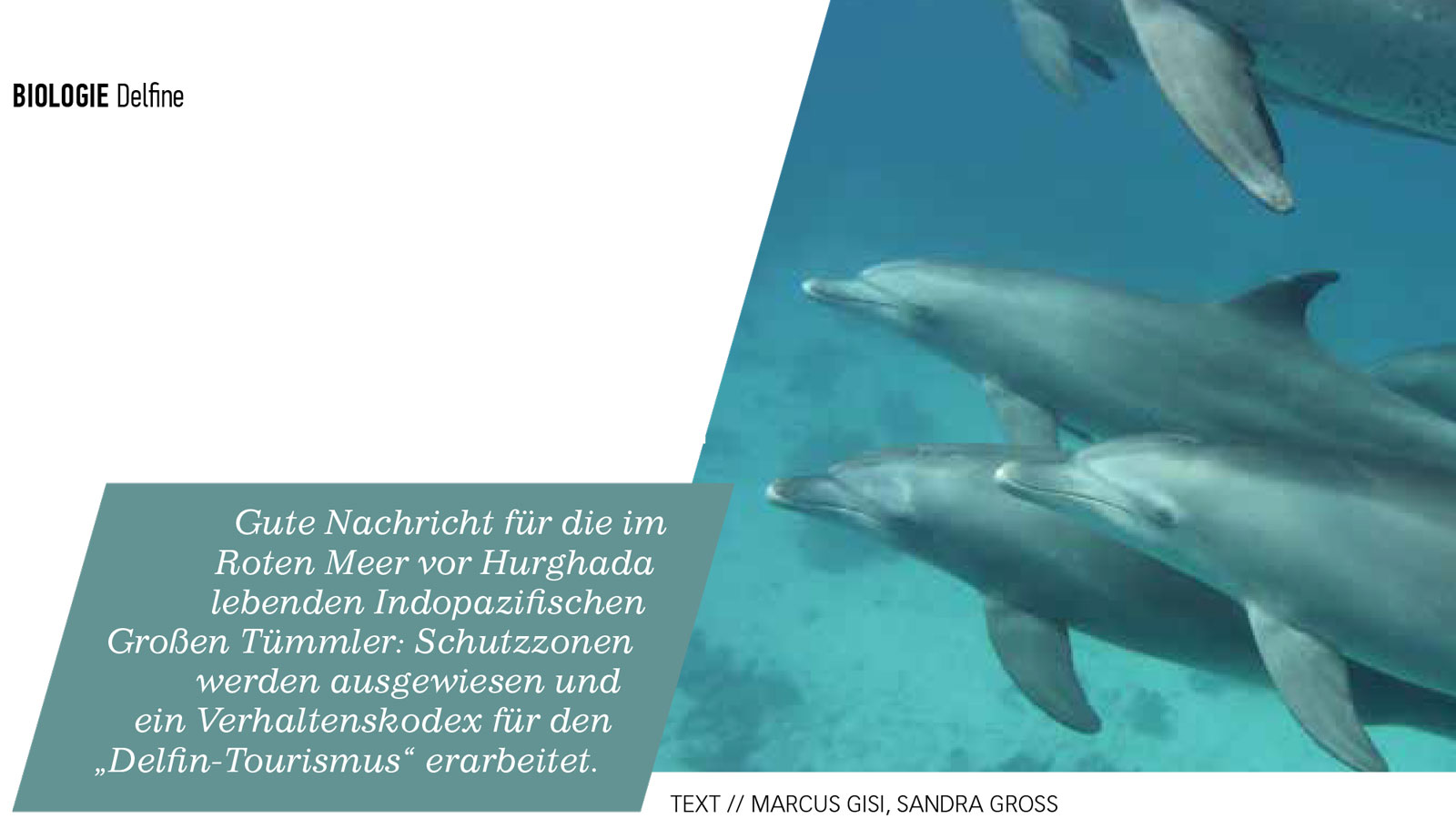 Präsentationen am Southwest Bottlenose Dolphin Forum von Cornwall Wildlife Trust, UK