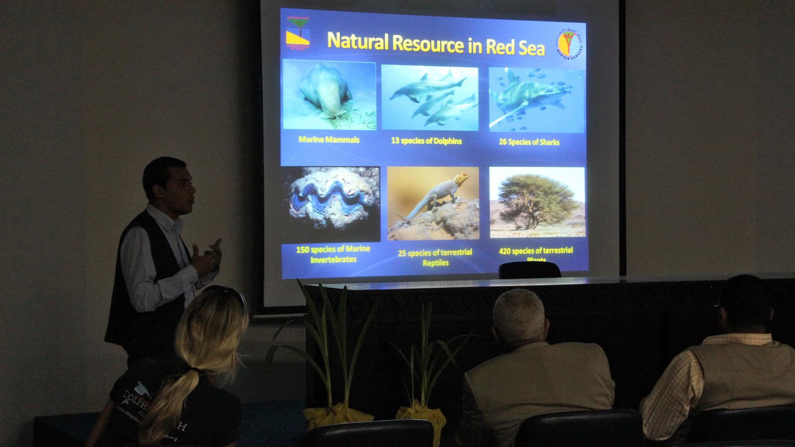 Workshop mit Dolphin Watch Alliance